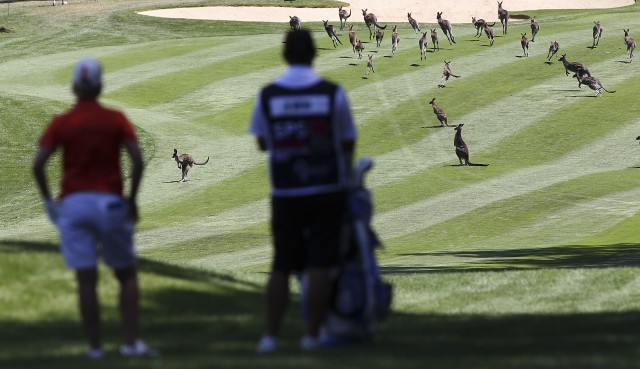A 'kangaroo delay' at the LPGA's season opener in Australia (Source: Getty)